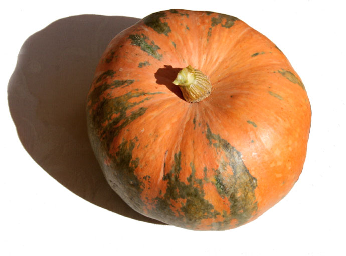 Pumpkin potiron abobra gros jaune hybridé