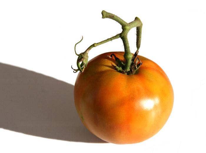 トマト tomato Xītomatl tomate