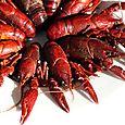 Crayfish ecrevisses