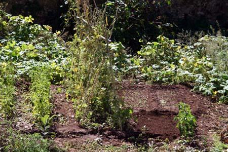 Jardin Rio da Figueira Santiago