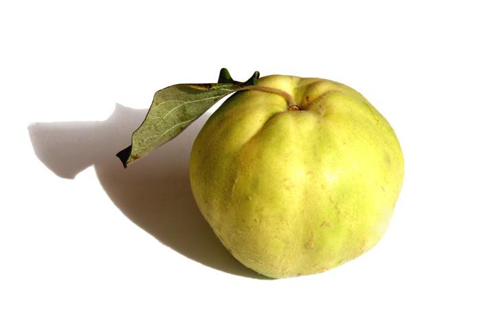 سفرجل quince sweet coing doux marmelo