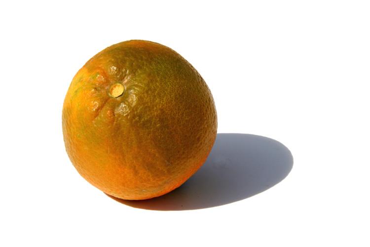 Orange baia laranja