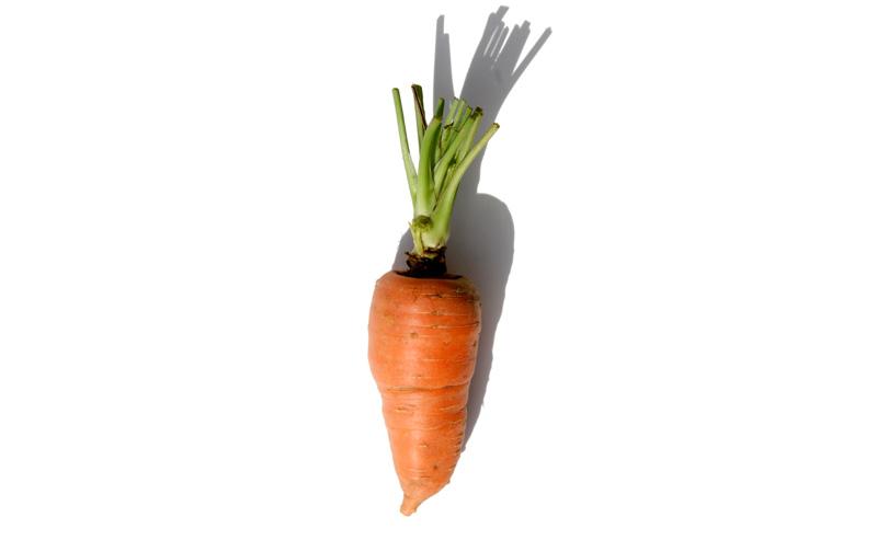 Carrot carotte