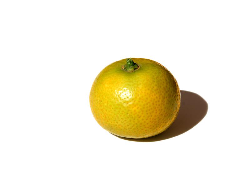 Orange amere myrtifolia Myrtle-leaf Orange