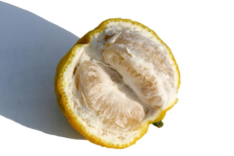 Peeled yuzu  coupé ユズ