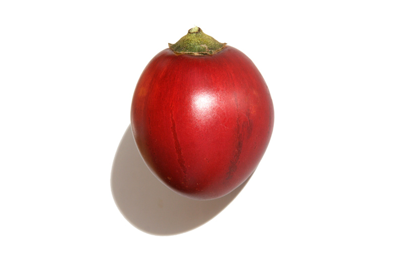 Tamarilho tomate japonês tomate inglês  tomate arbóreo