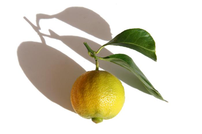 Sweet lime limette douce