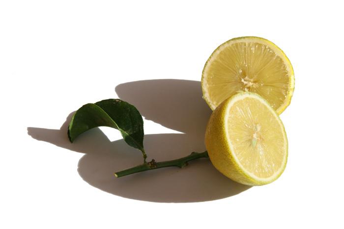 Limão doce citrus limetoides