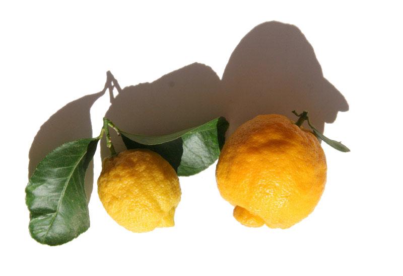 ベルガモット  bergamot