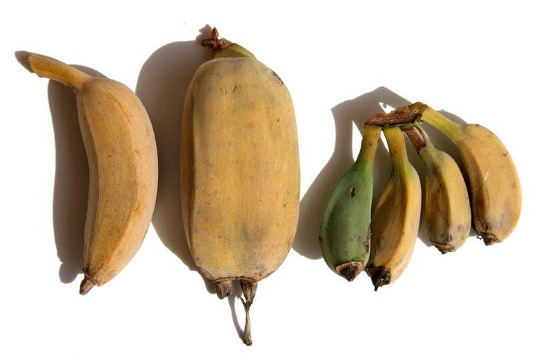 Banana family バナナ