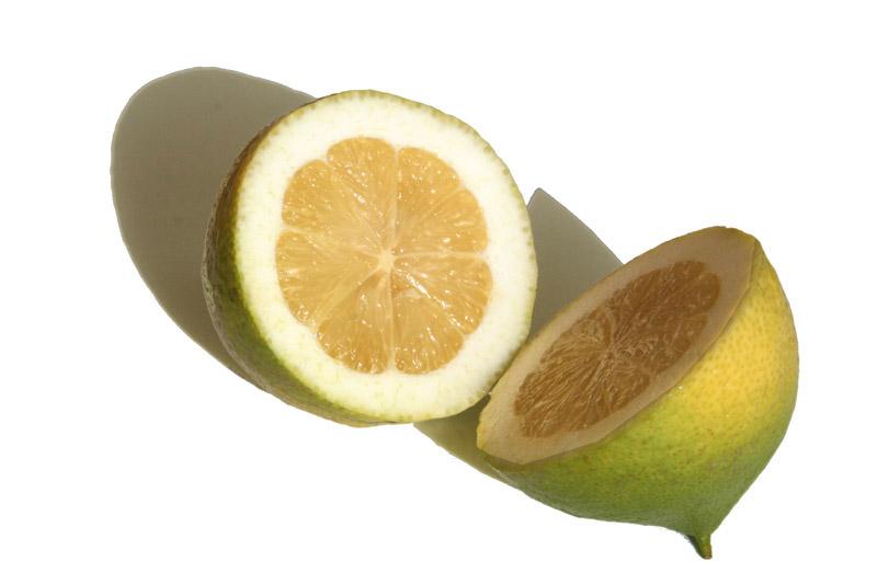 C lemon fino