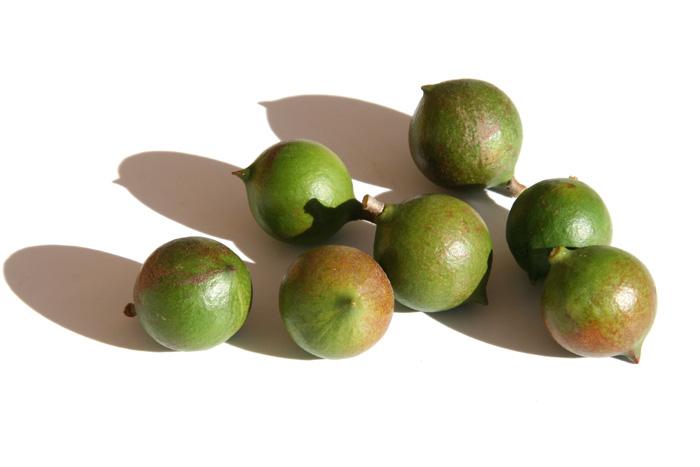Macadamia nuts マカダミア