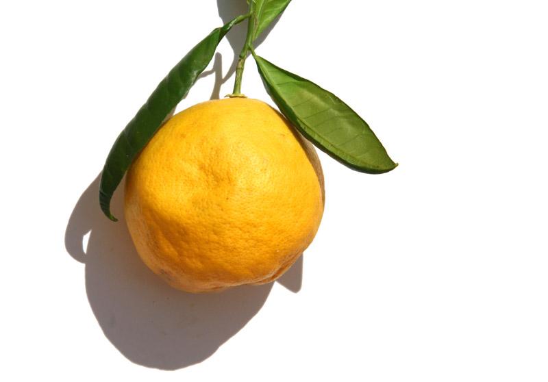 Grapefruit  vole pomelo campagnol