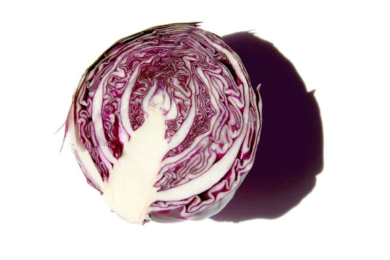 Red cabbage chou rouge cavolo rosso Brassica oleracea rubra