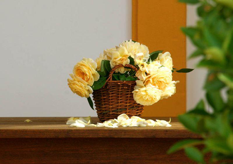 Happy birthday yellow roses jaunes