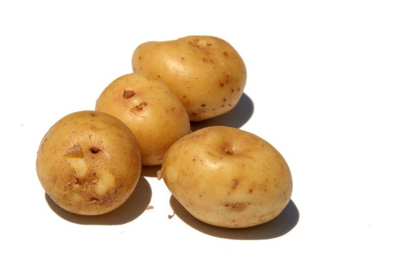 Pomme de terre nouvelle Bonnotte