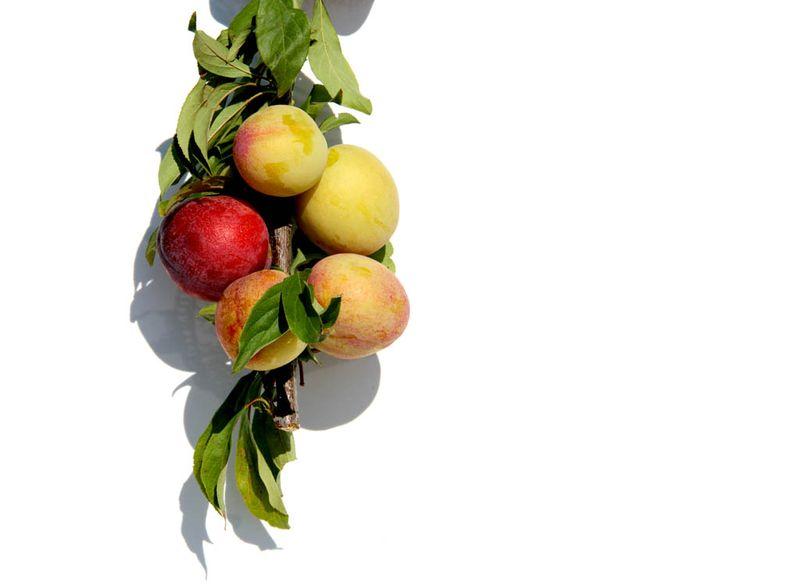 Plum prunes