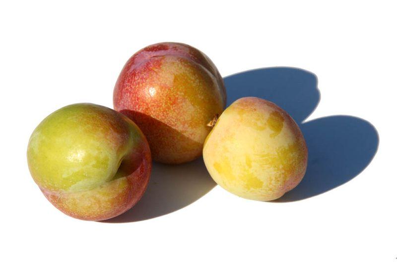 Ameixa prunes jaunes