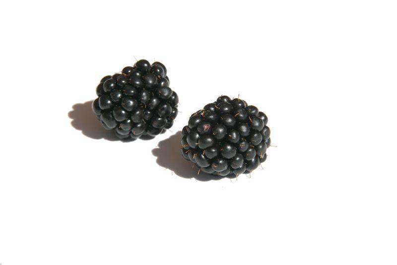 Blackberry عليق