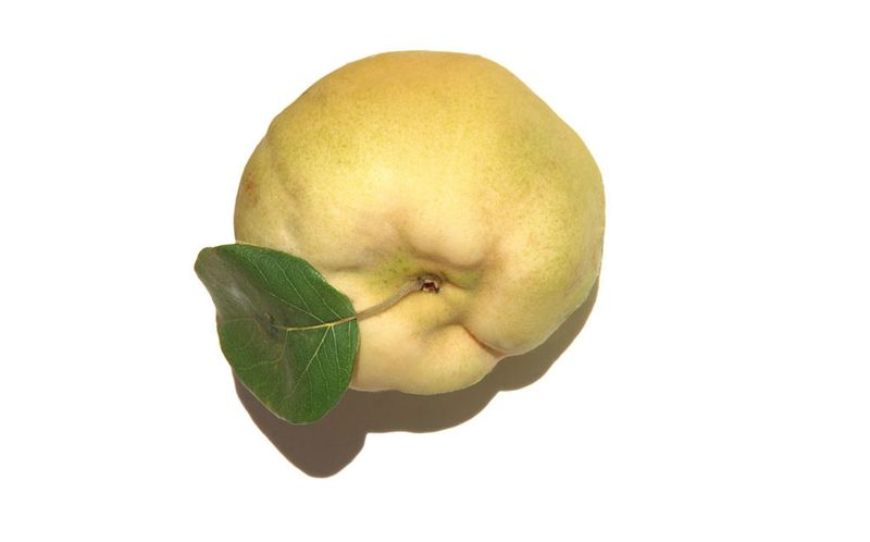 Quince coing سفرجل