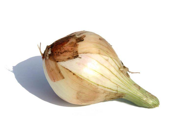 بصل onion