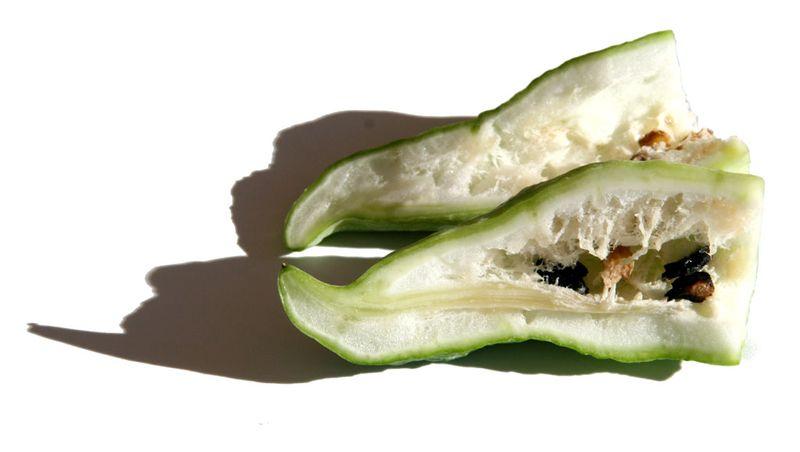 Cyclanthera pedata coupe