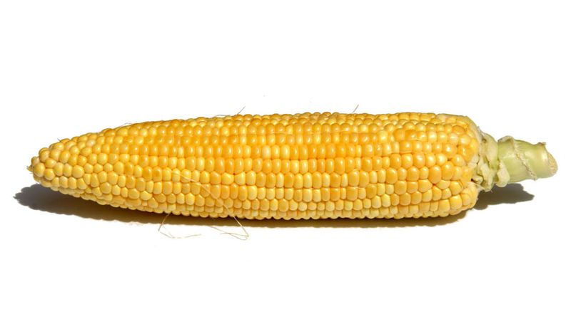 Maiz Sweet corn