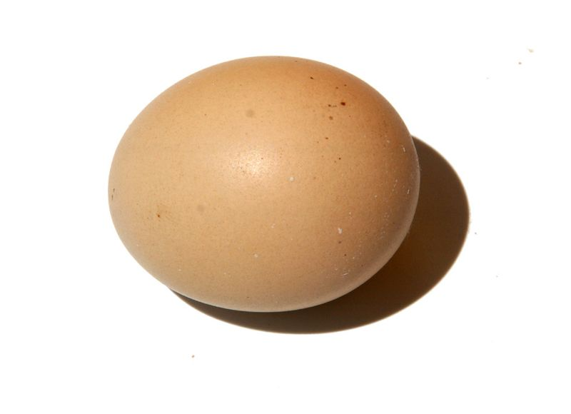 エッグ ovo egg oeuf