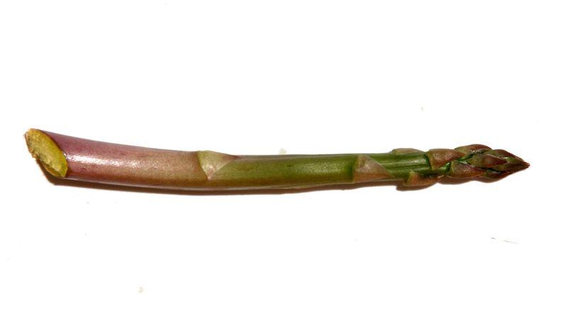 Aspargus asperge aspargos