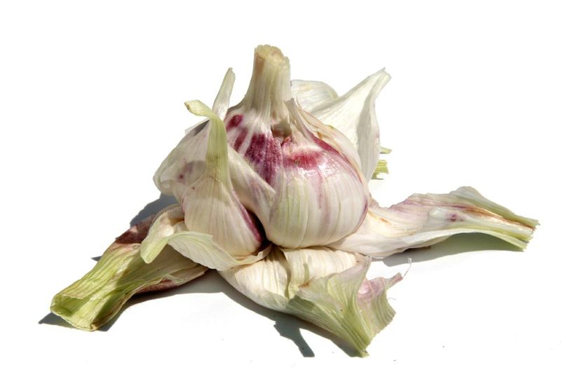 Garlic ثوم