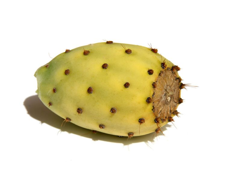 Prickly pear figue barbarie