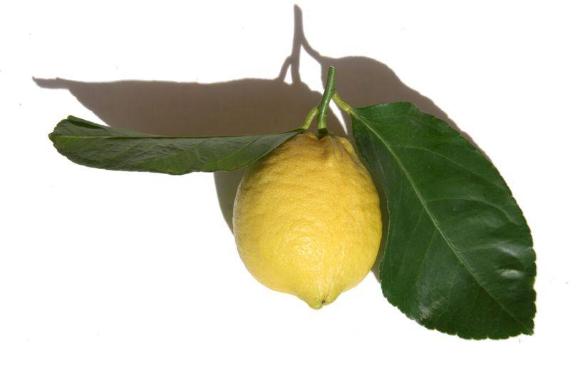 Limone di prodica