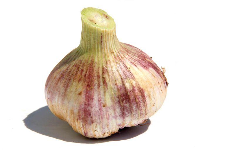 New garlic ail nouveau