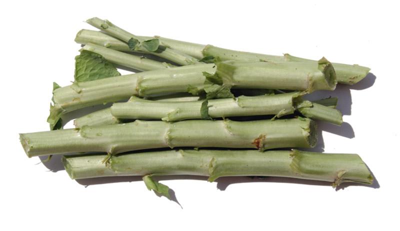 Stem lettuce celtuce laitue asperge