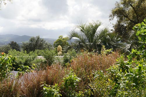 Jardin méditeranéen