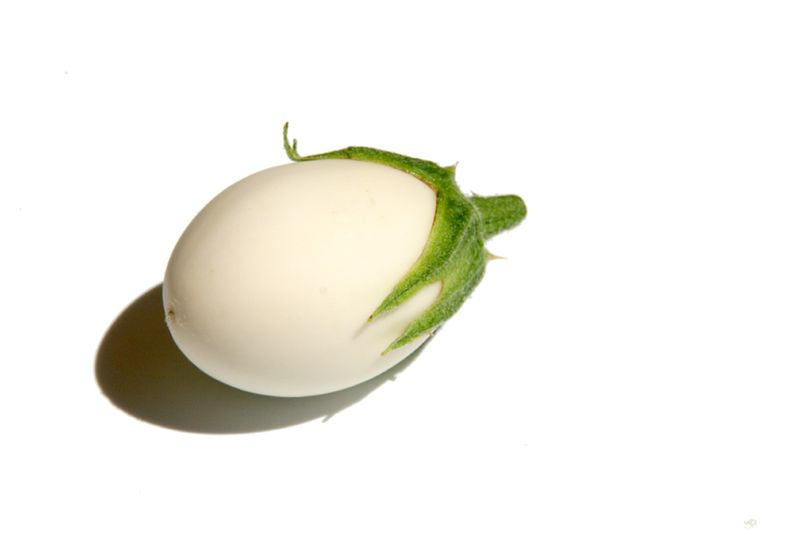 Eggplant Albergínia blanca