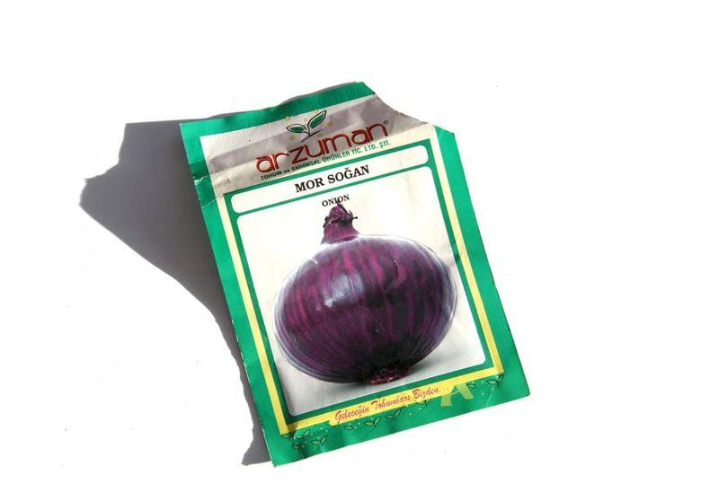 Mor sogan onion