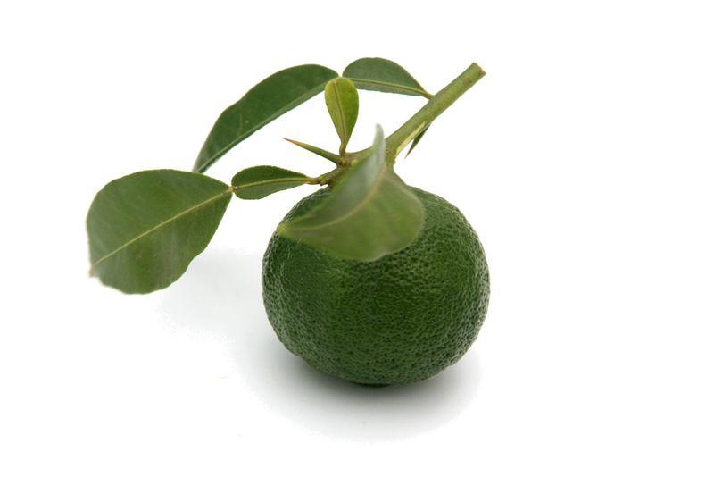 ユズ green yuzu vert