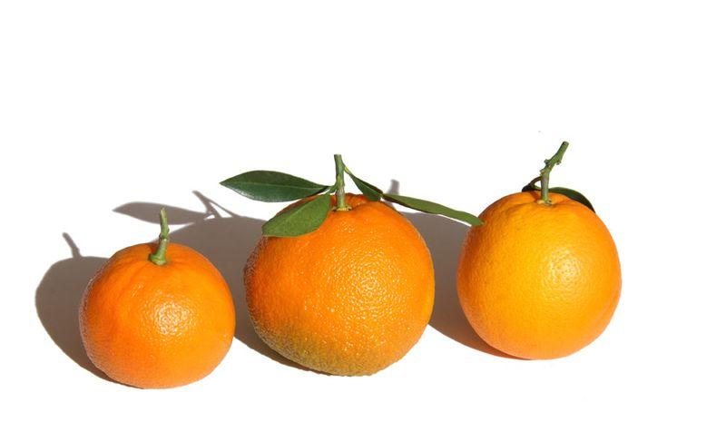 Laranja amargo e laranja doce