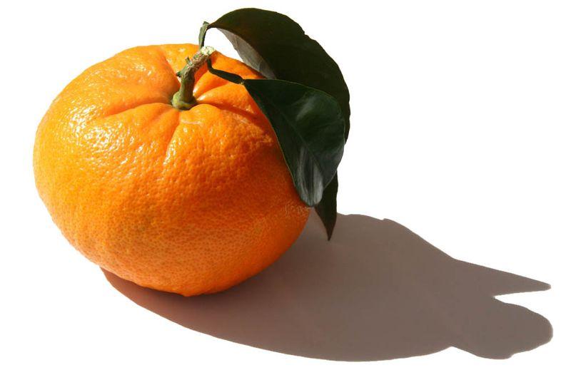 Orange fondazione
