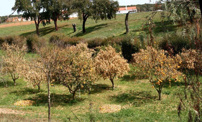 Joris orangers en fond de vallée