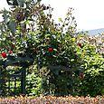 Portique de roses jardin d'Ann