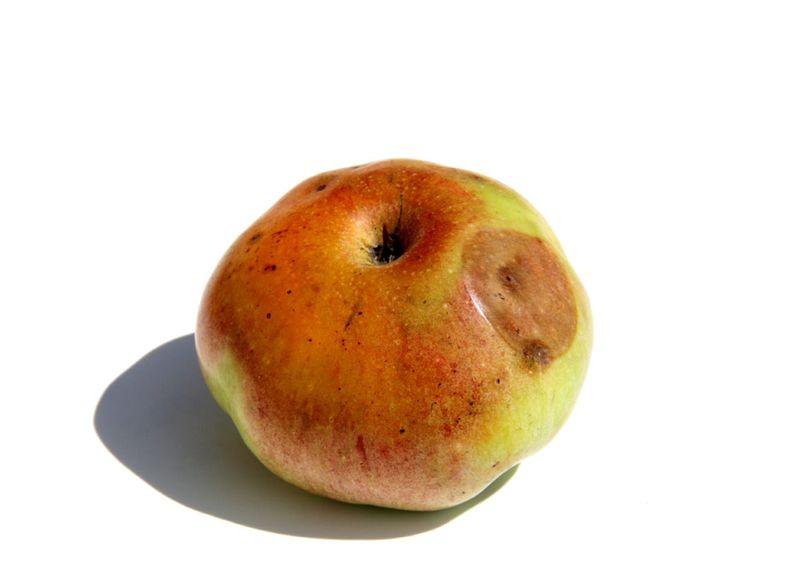 Ceratitis capitata apple pomme