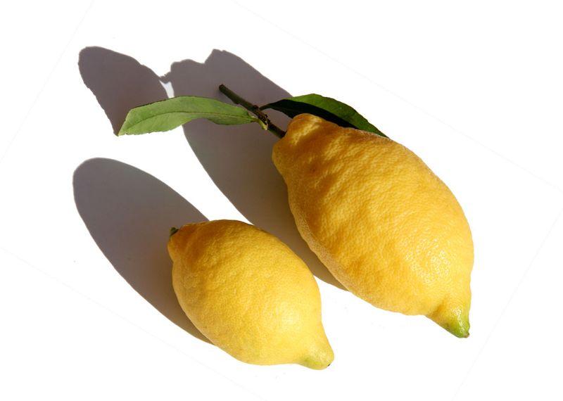 Citron amalfi et fino