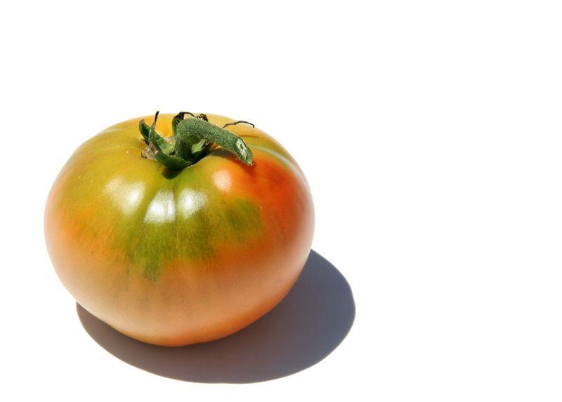 Tomato pantano