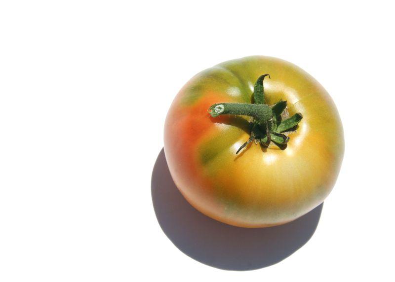 Tomato tomate