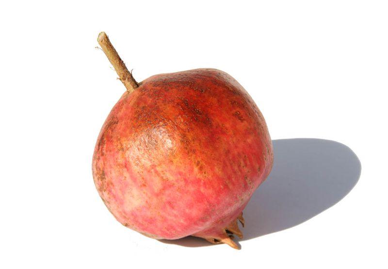 Gissarskii Rosovyi pomegranate