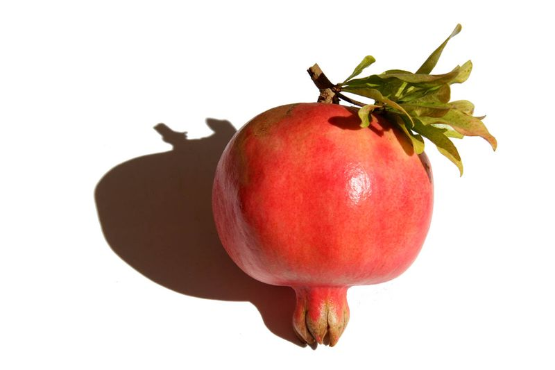 Sogdiana pomegranate
