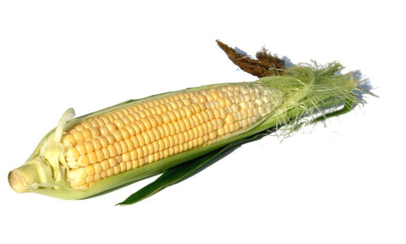 Milho corn