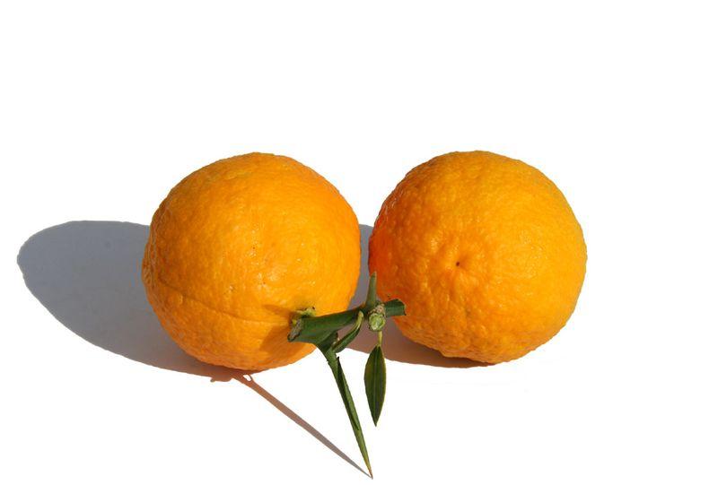 Tahizu citrus x otaiti